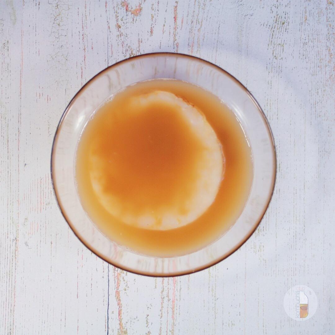 чайный гриб SCOBY